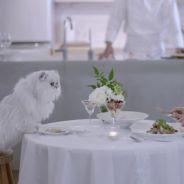 WTF : au Japon, des repas gastronomiques livrés à domicile pour dîner en tête à tête avec son chat !