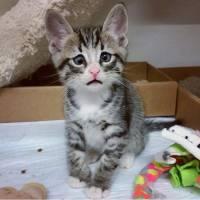 Bum : découvrez le Chat Potté... EN VRAI !