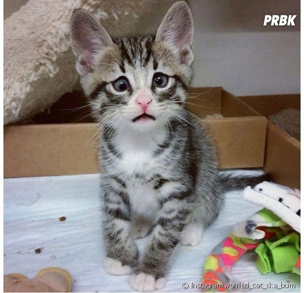 Bum le chat aux yeux du Chat Potté