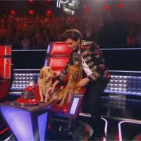 Mika : ses chiens s'invitent sur le plateau de The Voice 5