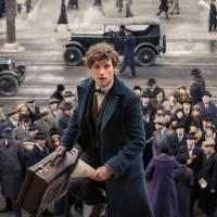 Harry Potter : des personnages présents dans Les Animaux Fantastiques... en version jeune ?