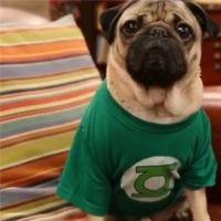 The Big Bang Theory parodiée par un chien, les acteurs sous le charme
