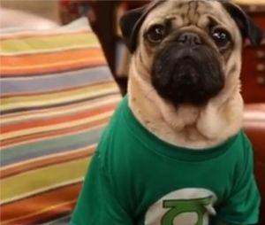 The Big Bang Theory : la série parodiée par Doug The Pug