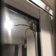 """Aragog """"en vrai"""" : cette araignée GÉANTE va vous faire halluciner 🕷️"""