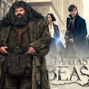 Les Animaux Fantastiques : Hagrid bientôt au casting de la saga ?