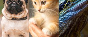 Spotify lance Pet Playlist : une playlists pour les chiens, les chats... et les iguanes