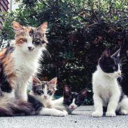 Cet escape game avec des chats vous propose de les adopter en fin de partie