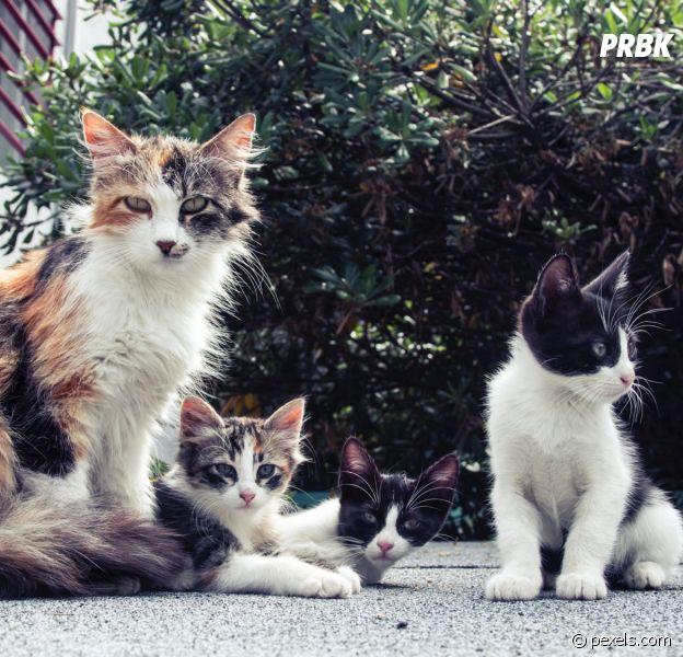 La planète des chats : l'escape game avec des chats à adopter