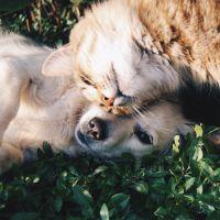 Abandon et maltraitance animale : bientôt un test de connaissances avant de pouvoir adopter ?