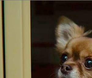 Sex Education saison 3 : Baby, le chien de Mimi Keene, apparaît dans la série