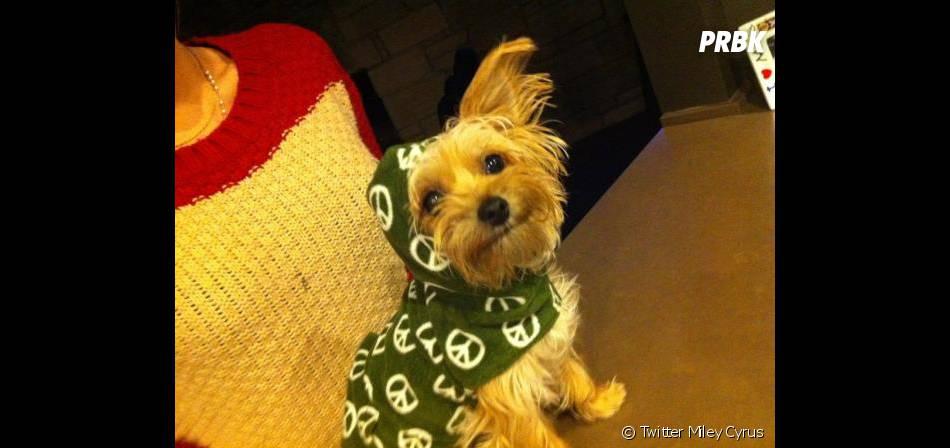 Son chien Lila est une star sur Twitter!