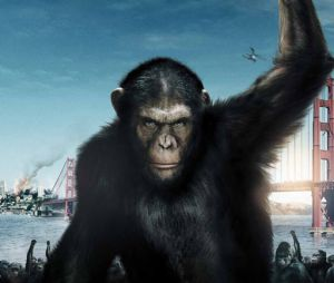 La suite de La planète des singes : les origines cherche son réalisateur !