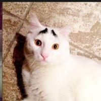 Sam, le chat avec...des sourcils !