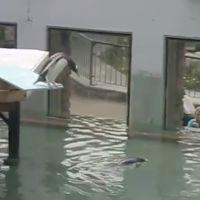 Splash : Sheryfa Luna, la parodie de son plongeon avec un pingouin