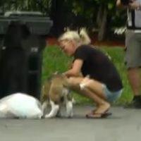 Les Anges de la télé-réalité 5 : Angel le chien débarque, Mike un bodyguard en carton (résumé)
