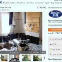 Vends maison à 150 000 euros... plants de cannabis inclus