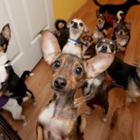 On a échangé... nos chiens : nouvelle émission de M6 ?
