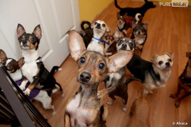 M6 plancherait sur un nouveau concept d'émission : On a échangé nos chiens !