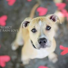 [PHOTOS] Des portraits à croquer pour faire adopter des chiens abandonnés