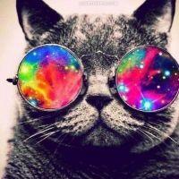 Cats On Trees, Nikky Yanofsky, Cris Cab... #Playlist #41