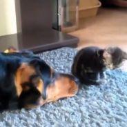 [CUTE] La vidéo la plus mignonne du web sur l'amitié chien-chat