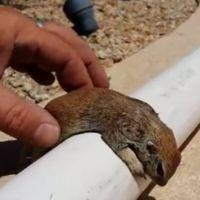 [VIDÉO] Le héros du jour : il sauve un petit écureuil avec un massage cardiaque