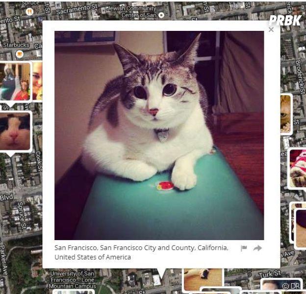 I Know Where Your Cat Lives : la plateforme incontournable pour les amoureux des chats