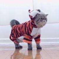 Venus, Oskar et tous les chats célèbres se mobilisent pour sauver... les tigres