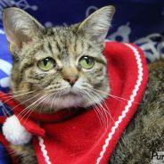 Tucker, le chat le plus triste du monde qui va vous faire craquer