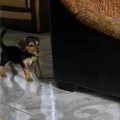Le chien le plus mignon... et le plus stupide de la semaine