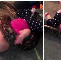 Mignon ou flippant ? Un bébé joue avec un énorme python !