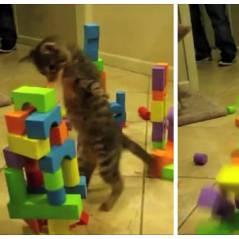Mignon et touchant : un chaton à deux pattes se prend pour Godzilla !