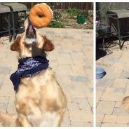 Cute fail : voici Fritz, le chien le moins doué du monde pour attraper de la nourriture en vol !