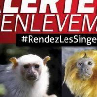 #RendezLesSinges : Twitter se mobilise pour retrouver les animaux volés du Zoo de Beauval
