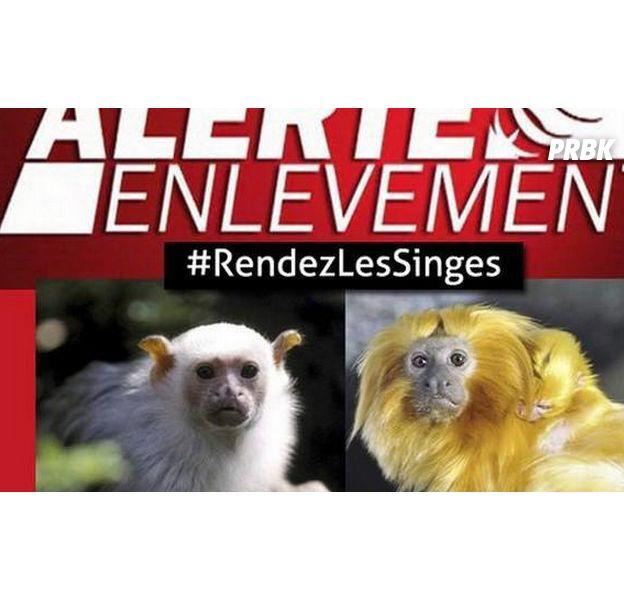 17 singes volés dans un Zoo, les internautes se mobilisent