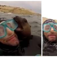 Trop cute : des plongeurs rencontrent un adorable petit phoque très joueur