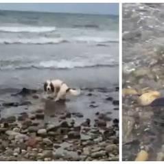 Un bébé dauphin sauvé... par un chien !