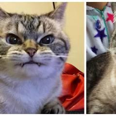 """Loki, l'adorable """"chat-vampire"""" d'Instagram qui fait le buzz"""