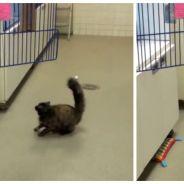 On a trouvé le pire cauchemar de TOUS les chats, et ce n'est pas le chien du voisin !