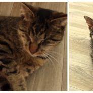 """Cet adorable chat aveugle """"voit"""" avec ses oreilles. Il va vous impressionner et vous faire fondre"""