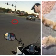 Une motarde prend tous les risques pour sauver un chaton, la vidéo donne des frissons