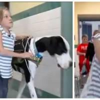 Une petite fille de 11 ans handicapée remarche grâce à son chien : la belle histoire du jour