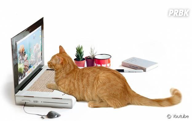 Grattoir pour chat en forme de PC portable