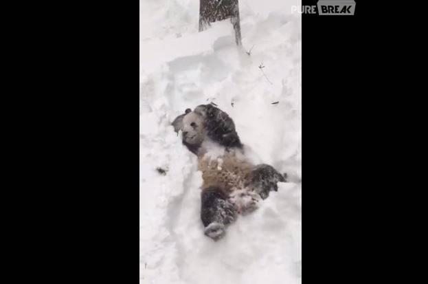 Snowzilla : un panda se roule dans la neige