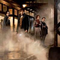 Harry Potter : J.K. Rowling confirme une trilogie pour Les Animaux Fantastiques