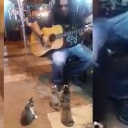 Ignoré des passants ce musicien de rue captive quatre chatons