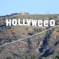 """Hollywood, le panneau mythique transformé en """"HollyWEED"""" : 2017, l'année de la moquette ?"""
