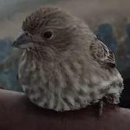 Cute : il sauve un oiseau du froid... en soufflant sur ses pattes pour le réchauffer