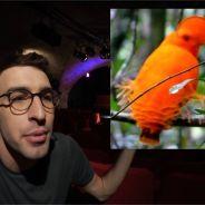 Max Bird en safari : nouveau concept original et passionnant pour le YouTubeur