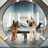 Comme chiens et chats ... bande annonce délirante du film